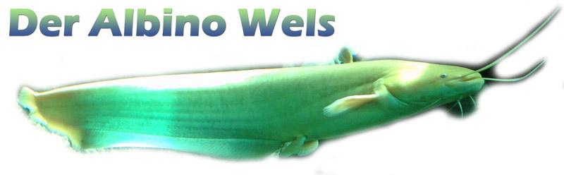 wels-waller-merkmale-foto