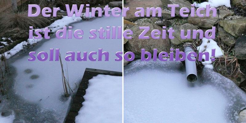 tipps-teich-im-winter-pflegen