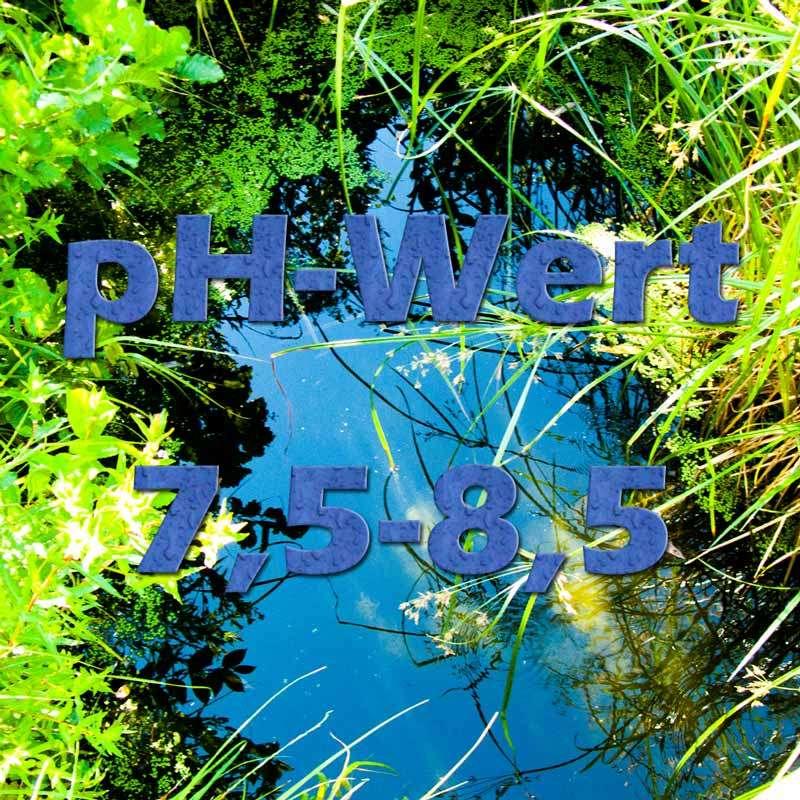 Der pH-Wert im Teich   Teichfilter