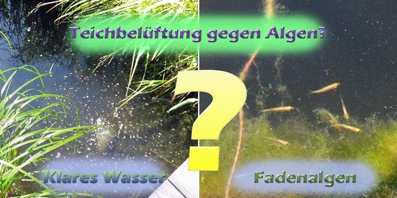 Kann Man Die Teichbeluftung Auch Gegen Algen Im Teich Verwenden