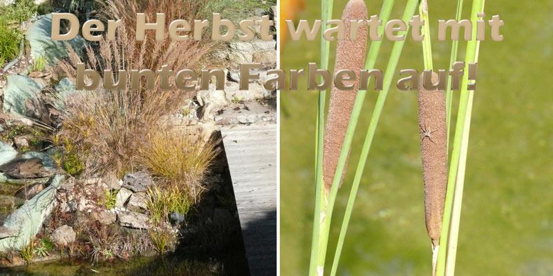 herbst-am-teich-mit-pflanzen