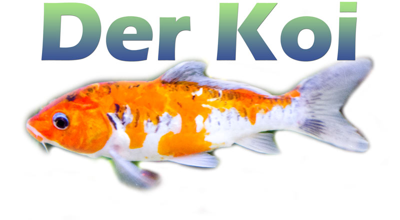 koi-farben-merkmale-bild