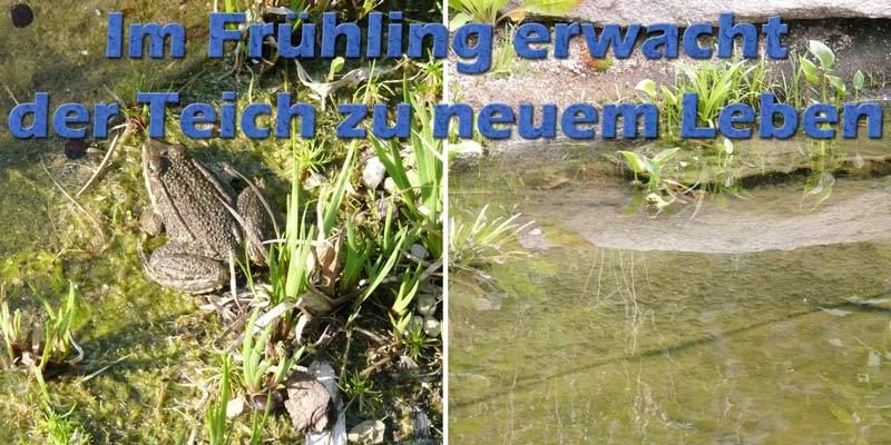 teich-im-fruehling-frosch-pflegeplan