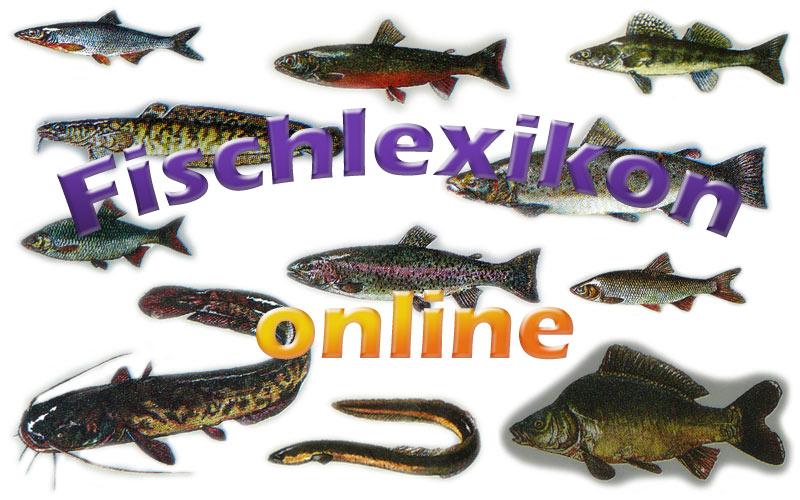 Fischlexikon online mit Bildern