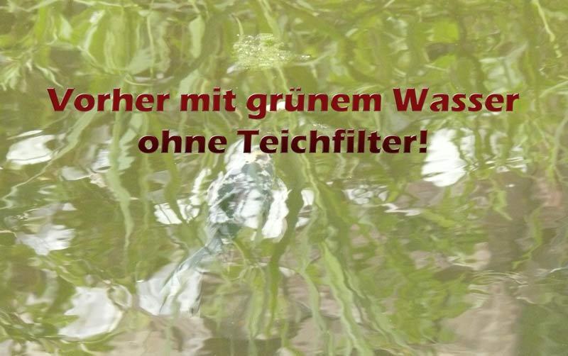 gruener-teich-ohne-teichfilter-vergleich