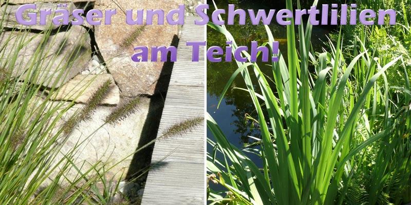 lampenputzergras-wasserschwertlilie-teich