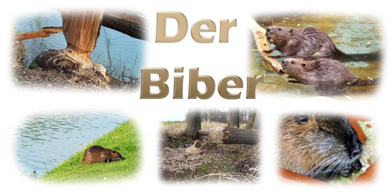 biber-fotos