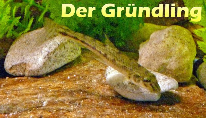 gruendling-fotos