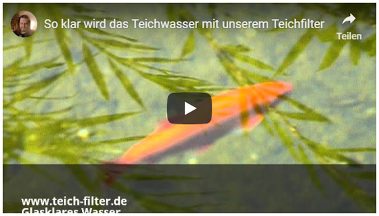 video-glasklares-wasser-teich-1