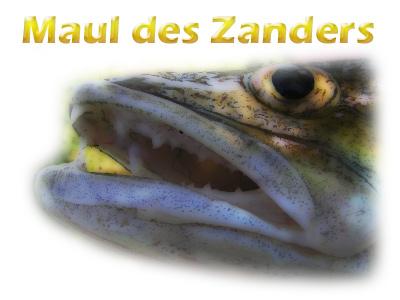 kopf-maul-zander