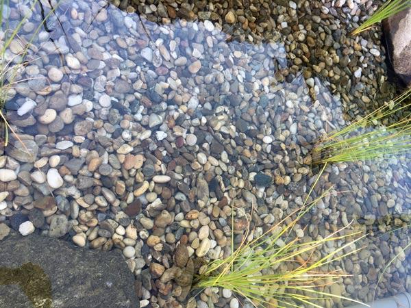 teichfilter-erfahrungen-schwimmteich-4