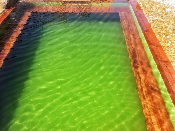 teichfilter-erfahrungen-schwimmteich-7